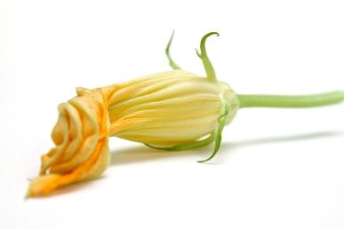 IMG_5691-Zuchini-flower-Squash-blossom-750